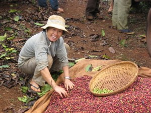 Arabica Coffee Sorting in Vietnam