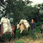 United Nations Say Thousands of Rust-Hit Honduran Coffee Families Lack Food Security