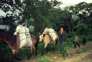 Coffee Being Brought in to Mills From Harvest in Remote Areas in Honduras