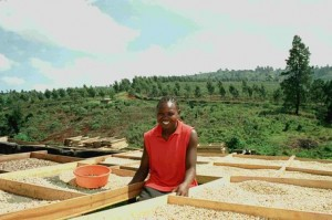 Coffee Drying at Mt Elgon in Ugande