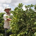 Brazil's Comexim Cuts 2013-14 Coffee Harvest View by 3.8M bags To 49.4M Bags