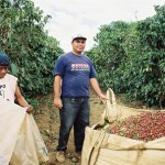 BREAKING NEWS: Brazil Coffee Exports Seen Sharply Down In Coming Months