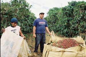 Coffee Harvest In Bahia in Northern Brazil
