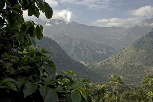 El Injerto Coffee Farm in Huehuetenango Mountains in Guatemala