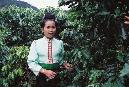 Vietnam's Coffee Boom Designed to Target Poverty Eradication