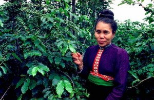 Ethnic Hmong Coffee Grower in Northern Vietnam
