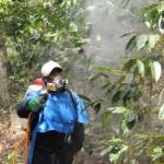 Blog de Café en Español: México y Costa Rica se juntan en combatir la roya del café