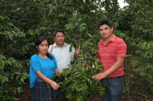 Guatemalan Coffee Growers in Coban
