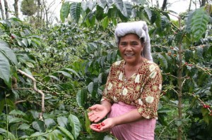 Indonesian Woman Coffee Grower Visiting Abandonebd Lands in Aceh After Tsumani