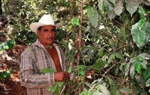 Mexican Coffee Grower in Nayarit