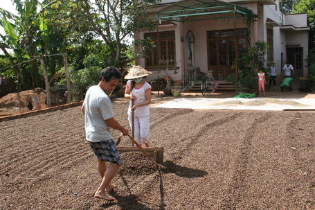 SPECIAL REPORT: Vietnam, The World's Nr 2 Coffee Producer, Still Has Room To Grow