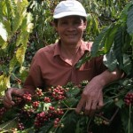 Vietnam Coffee Exports in June Plummets 37% on Lower Supply