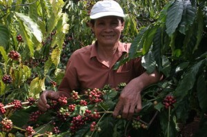 Robusta Coffee Grower Chau Ngoc Hung in Vietnam
