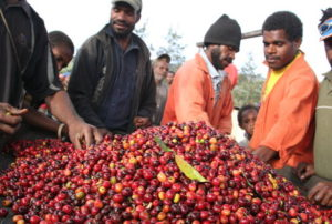 Small Producers Bringing In Fresh Harvest in Papua New Guinea