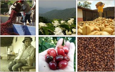 SI Tenemos Noticias de Café en Español en SpillingTheBeans