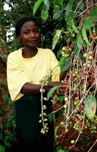 Ugandan Women Picking Coffee