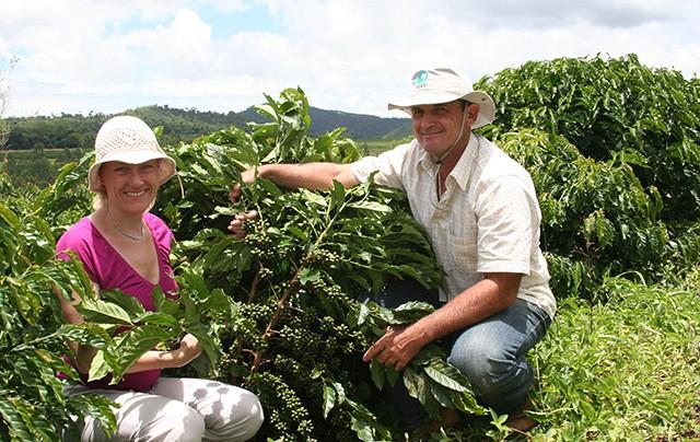 Safras & Mercado: Previsão de Colheita de Café 2013-14 a 52,9M Sacas