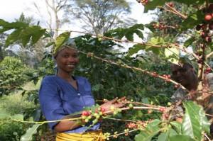 Woman Picking Coffee at Machare Estate in Tanzania