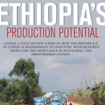 SPECIAL REPORT: Ethiopia Coffee Renovation Starting to Yield Results