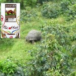Coffee of The Day: Jewell From Ecuador's Galapagos Islands
