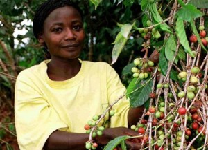 Uganda Coffee Picker