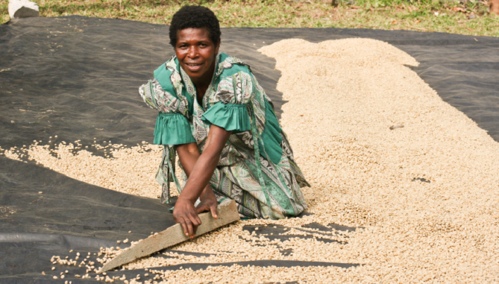 Coffee of The Day: Tanna Island From Vanuatu in the South Pacific