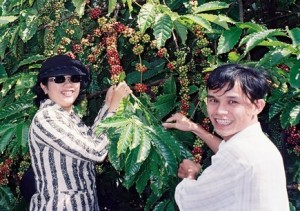 Vietnam Robusta Yields in Dak Lak