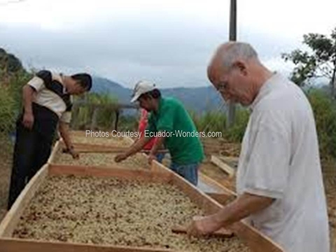 Most of Ecuador's Arabica Coffee is Naturals