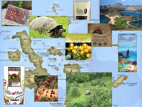 Galapagos Islands, Ecuador's Coffee Jewel