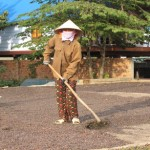 Vietnam Coffee Production Today Between 23M-25M Bags