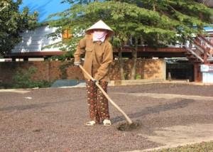 rsz_vietnamqualityimprovement[1]
