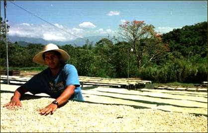 "Coffee of The Day: The ""Awesome"" Costa Rica Geisha by Sea Island Coffees – The Malbec of Coffee!"