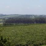 Brasil Exportará 30,5M de Sacas No Ano 2013, Estimativa de CeCafé