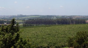 Fazenda Tozan in Brazil With Campinas Behind