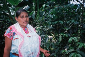 Indigenous Coffee Grower in Puebla in Mexico