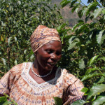 The Rwanda Genocide – A Coffee Conflict!