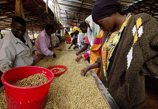 Rwanda's Maraba Coop And Reconciliation Through Coffee