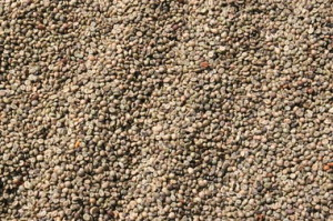 rsz_vietnam_green_coffee_bean_drying_improving_robusta_quality