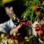 Burundi Doubles Cup Of Excellence Lots As Minister Vows to Improve Coffee Quality
