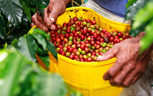 What Caused The Real Production Crisis For Colombia's Coffee Growers?