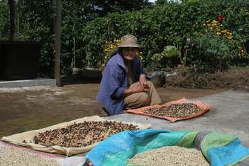 Rust And Climate Change Worst Culprits In Colombia Coffee Crisis