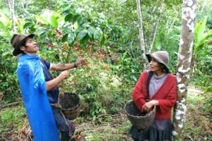 Productores de Cafe en Peru