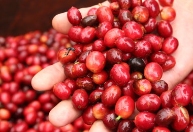 SPECIAL REPORT: Guatemala – A Boutique Of Specialty Coffees