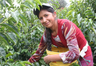 INTERVIEW: Lindsey Bolger on GMCR's Coffee Sourcing Solution
