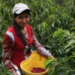SPECIAL REPORT: Ecuador's Coffee Industry Eyes New Markets Home And Abroad