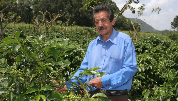 HARVEST ANALYSIS: Guatemala's 2013-14 Coffee Crop To Drop As Low As 2.7M Bags, Smallest In 30 Years