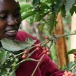 Angola and Kenya To Boost Relations, Collaborate on Coffee Development