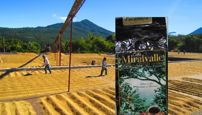 Coffee of the Day: Single Estate El Salvador Pacamara From Cafe Miralvalle In Ahuachapan