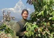 Nepal Coffee Output Falls 12 Percent On Pests And Lack Of Husbandry