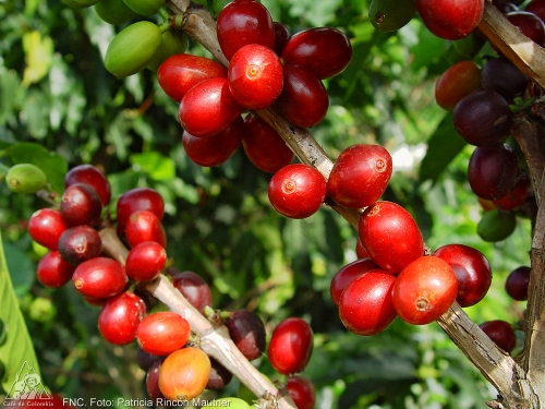 MARKET ANALYSIS: Arabica Coffee Prices Surge Back Over $2/Lb – Are Prices In New $1.80-$2/lb Range?